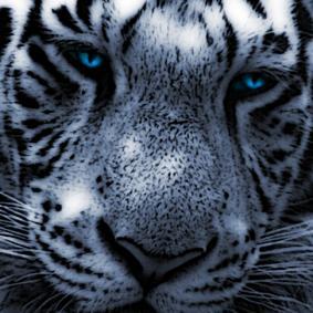 Snowerge profilképe